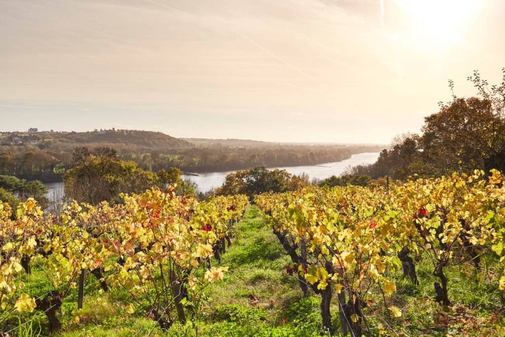 Routes Des Vins Panoramas De Loire Wines And Vineyards