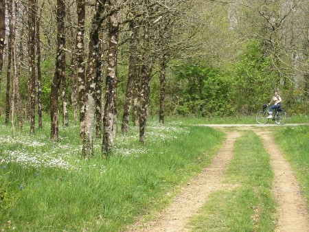 ©Nelly-Coupe