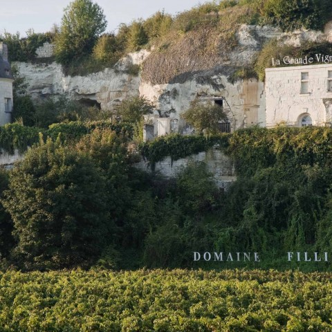 Visit the vineyards of Anjou-Saumur and discover its cultural heritage